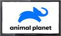 Animal Planet live stream